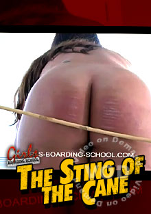The Sting Of The Cane Box Cover